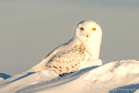 Perched on the Snow